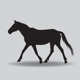 Running horse black silhouette Royalty Free Stock Photography