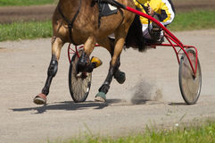 Running horse Stock Images