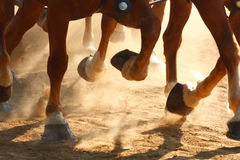 Running Horse Hooves. Close-up on the feet of galloping horses Stock Photos