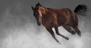 Running horse. Horse jumping and running in the fog Royalty Free Stock Images