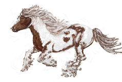 A running horse with mane in the wind.. Stock Images