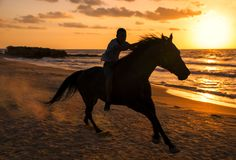 Running horse on sea beach royalty free stock image