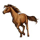 Running horse sketch with brown racehorse. Running horse sketch with galloping brown arabian racehorse. Equestrian sporting competition, horse racing or t-shirt Stock Images