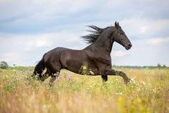 Running horse. stock photos
