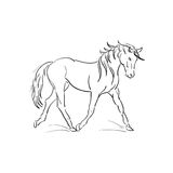 Running horse vector outline. On a white background Royalty Free Illustration