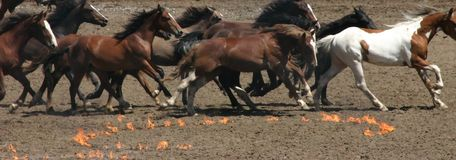 Running horses and fire circles Royalty Free Stock Images