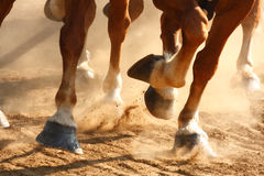 Running Horses Hooves. Close-up view on the hooves of horses running through a dusty field Stock Photos