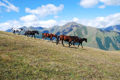 Running horses mountains Stock Photo