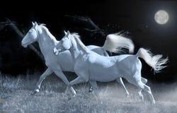 Running horses in the night Stock Image
