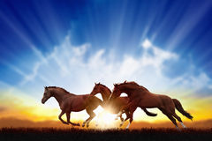 Running horses. Peaceful background - running horses, beautiful sunset, picture for chinese year of horse 2014 Stock Images