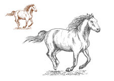 Running horses pencil sketch portrait Royalty Free Stock Image