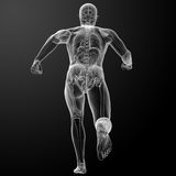 Running human anatomy by X-rays Stock Image