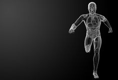 Running human anatomy by X-rays Royalty Free Stock Photography