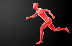 Running human anatomy by X-rays in red Royalty Free Stock Photos