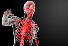 Running human anatomy by X-rays in red Royalty Free Stock Photo