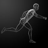 Running human anatomy by X-rays Royalty Free Stock Photos