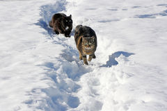Free Running In The Snow Gives Pleasure Stock Photos - 23673163