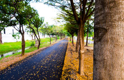 Running lane. Asphalt running and bicycle lane in city park, autumn season, front focus blurred background Stock Photo