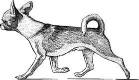 Running lap dog. Vector drawing of the walking cute dog vector illustration