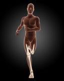 Running male medical skeleton. 3D render of a running male medical skeleton Royalty Free Stock Image