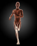 Running male medical skeleton Stock Photos