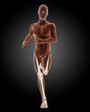 Running male medical skeleton. 3D render of a running male medical skeleton Stock Photos