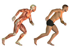Running man anatomy study Royalty Free Stock Photo