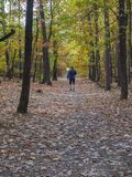 Running man in blue jacket on forest road in autumn royalty free stock photo