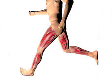 Running man muscles ankle Royalty Free Stock Photo