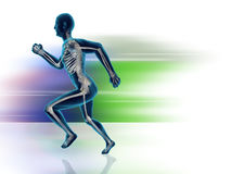 Running Man Posture. High quality 3d image of xray human man running Royalty Free Stock Photo