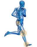 Running man seen by x-raywith pain in the leg Royalty Free Stock Images