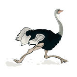 A running ostrich Royalty Free Stock Photos