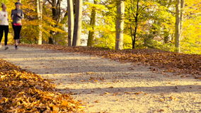 Running at park in autumn stock video footage