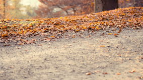 Running at park in autumn. Two female friends workout at park running in a warm sunset light stock video footage