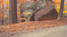 Running at park in autumn. Two female friends workout at park running in a warm sunset light stock footage