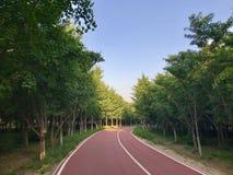 Blue sky green trees and sunny sunshine running path. Running path with green trees and blue sky Royalty Free Stock Photography