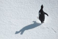 Running penguin Royalty Free Stock Photos