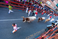 Running  people and bulls Royalty Free Stock Photos