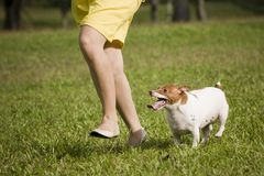 Running with pet dog Stock Photos