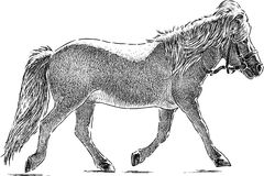 Running pony Royalty Free Stock Photography