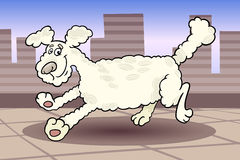 Running poodle dog cartoon illustration Royalty Free Stock Images