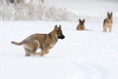 Running puppy Stock Photos