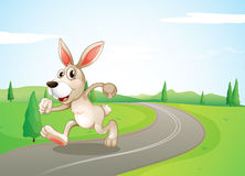 A running rabbit at the road Stock Photo