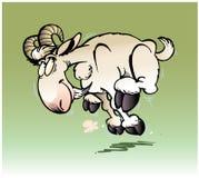 Running Ram Stock Image