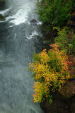 Running river and autumn leaves Stock Image