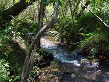 Running River in Forest Stock Photography