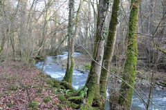 Running river trough trees. Running river in forest and trees early spring Stock Images
