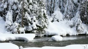 Running river in winter. Running water of a small river between floes in winter time, with powdered snow on the branches of fir trees, in the background stock video footage