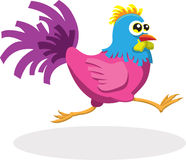 Running Rooster Stock Image