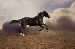 Running Russian trotter Royalty Free Stock Photography